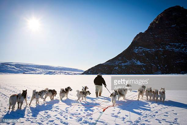 Inuit man walks with sled dogs on snowy sea ice