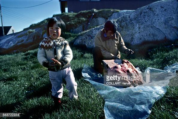 Inuit preparing seal skins in the village of Kagssemiut The Greenlanders no longer hunt polar bears seals and whales as before They have to respect a...