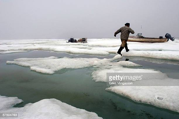 Inupiat Eskimo Johnny Weyiouanna walks on melting ice on top of the frozen Chukchi Sea June 09 2005 in Shishmaref Alaska USA 'We risk our lives every...