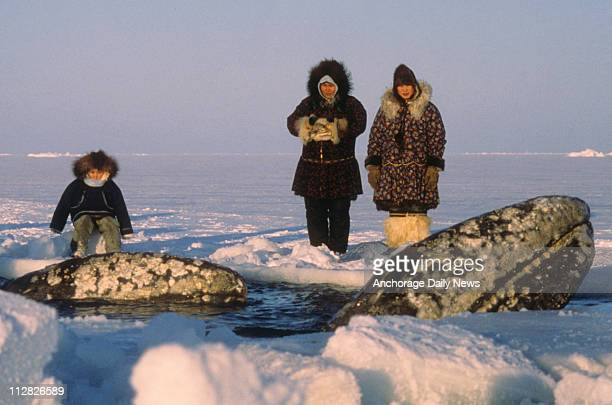 Inupiat Eskimos watch the California gray whales surface for air in one of the breathing holes carved by rescuers in the Beaufort Sea ice off Point...
