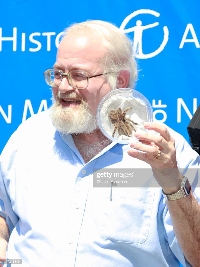 Invertebrate Zoology curator Norman Platnick displays a Chilean Rose Tarantula at the American Museum of Natural History on June 27, 2012 in New York City.