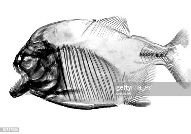 inverted fish x-ray