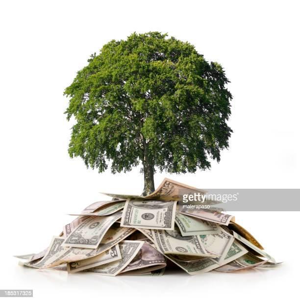 Investimento e ambiente. Albero su un mucchio di soldi.