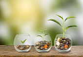 Investment concept. Growth plant on coins three step in clear glass bottle on wooden table with green blurred background and light. Conceptual saving money for growing business and future