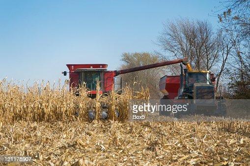 Iowa Corn Harvest