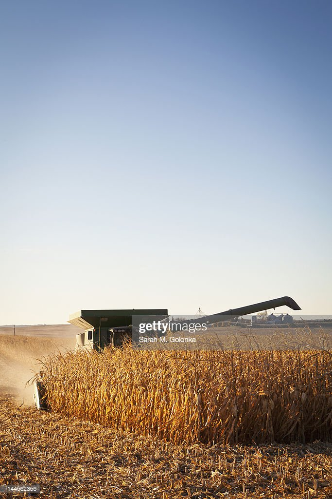 USA, Iowa, Latimer, Combine harvester harvesting corn
