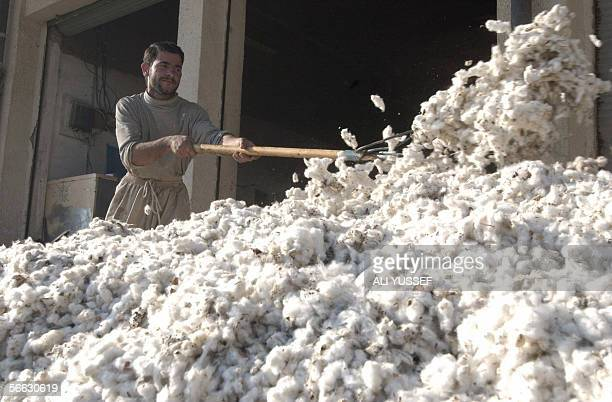 An Iraqi man prepares cotton used in making bed covers and pillows at a shop in Baquba 60 kms northeast of Baghdad 19 January 2006 Iraqi authorities...