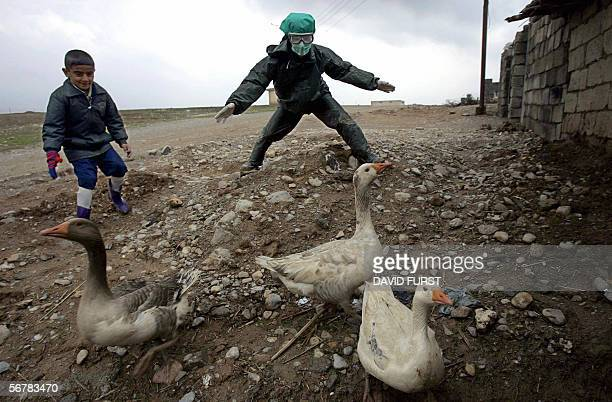 In an effort to help prevent the spread of the H5N1 virus or 'bird Flu' a Kurdish boy helps Iraqi government workers place a duck in a sack as...