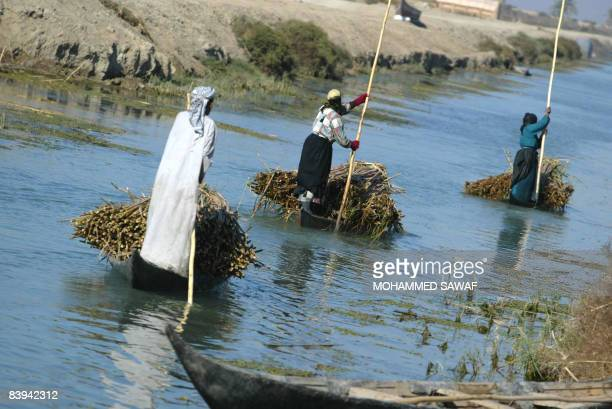 Iraqi Marsh Arab steer their canoes laden with reeds along the waters of Hor Hamidi 30 kms south of the Souk akShuykh 420 kms south of the capital...