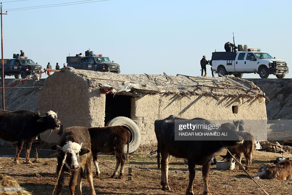 Iraqi security forces gather on a road in the Nahr al-Ezz area, 150km North of Basra, on February 12, 2016 during a security operation. Operations by the security forces, including the intelligence services, are regular in the area in an attempt to contain and disarm feuding local gangs and tribes. / AFP / HAIDAR MOHAMMED ALI