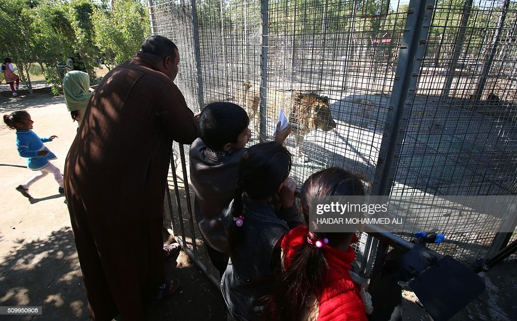 Iraqis look at a lion at a privately owned zoo in the Iraqi port city of Basra on February 13, 2016. / AFP / HAIDAR MOHAMMED ALI