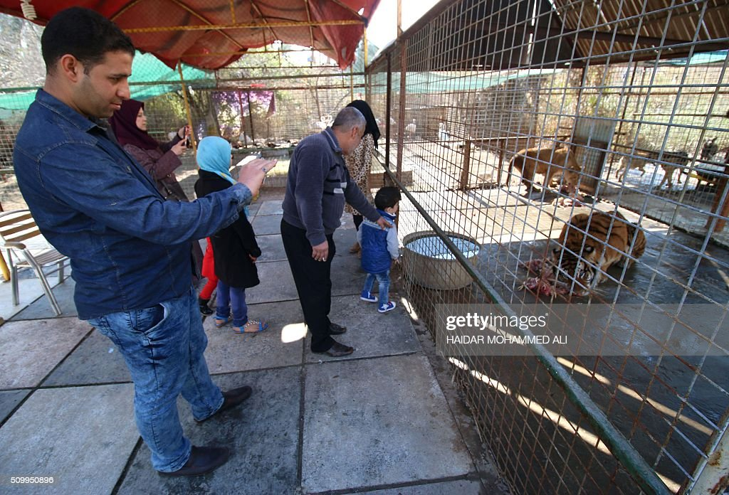 Iraqis look at animals inside their cage at a privately owned zoo in the Iraqi port city of Basra on February 13, 2016. / AFP / HAIDAR MOHAMMED ALI