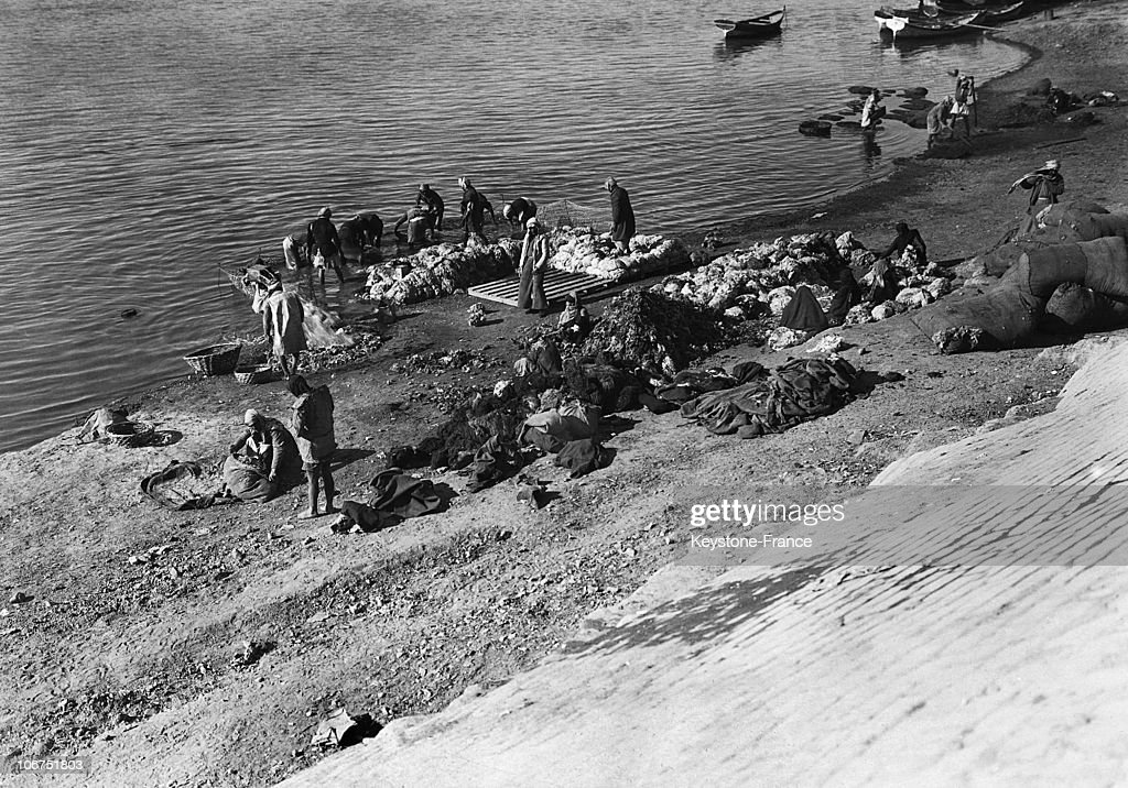 Iraqis Washing Wool In The Tigris River In The 1930'S