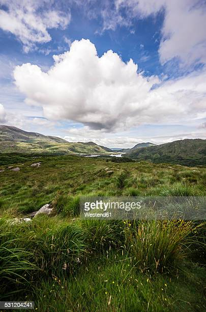Ireland, Ring of Kerry, Upper Lake, Derrycunihy Wood