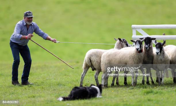Ireland's Frankie McCullough during the International Sheep Dog Trials at Lodge Park in Northleach Gloucestershire