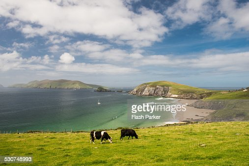 Ireland's Pastoral Grace