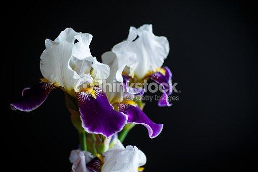 iris blume wei mit lila bl ten stock foto thinkstock. Black Bedroom Furniture Sets. Home Design Ideas