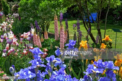 Jardim de íris : Foto de stock