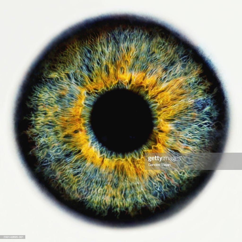Iris of eye, close-up (Digital Enhancement) : Stock Photo