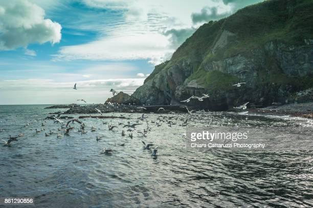 Irish cliffs landscape