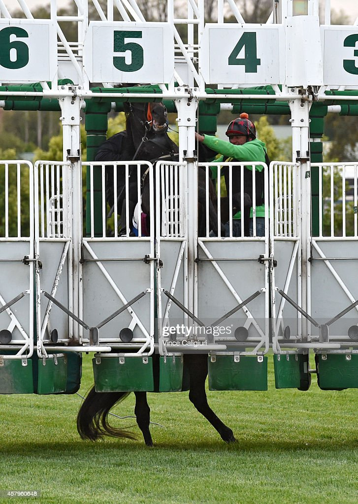 Irish sprinter Slade Power rears up before jumping successfully out of barriers during a trackwork session at Flemington Racecourse on October 28, 2014 in Melbourne, Australia.