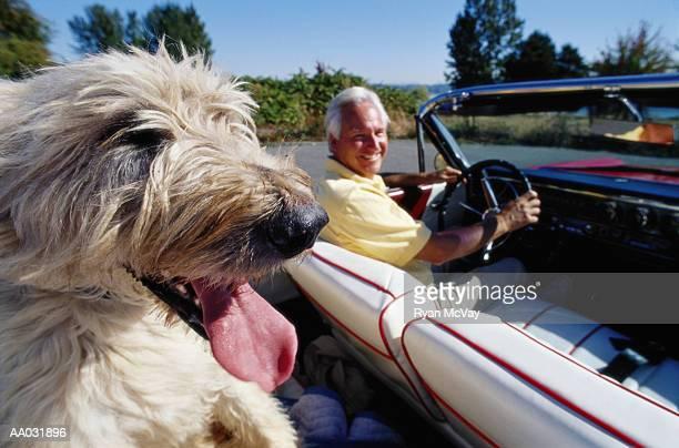 Irish Wolfhound in Convertible