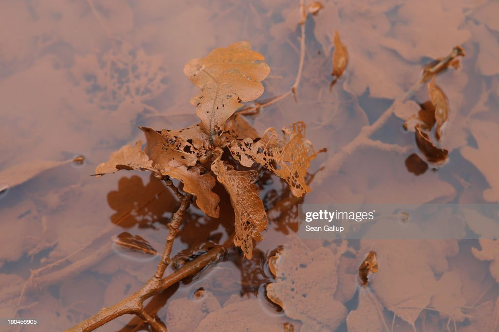 Iron-rich sludge clings to leaves in the ponds that are fed by a nearby creek next to Schloss Vetschau palace on January 31, 2013 in Vetschau, Germany. Many creeks and small Spree rivers in the regions around Vetschau and Spremberg in eastern Germany have turned a distinctive red or dark orange following the closure of nearby open-pit coal mines. Geologists say that the returning gound water levels in the former mines is bringing iron-rich ore into the water, and though the sludge isn't poisonous, environmentalists are concerned over the long-term affects.
