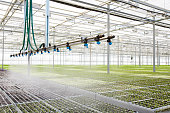 Interior of modern hothouse with advanced system of irrigation and plant care