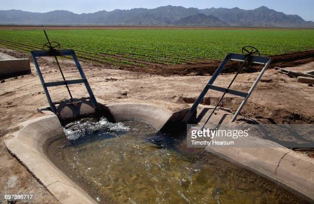 Irrigation control structure; lettuce field beyond