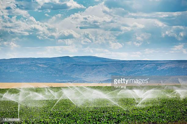 Équipement d'Irrigation, de l'agriculture, d'extincteurs automatiques à eau arroser les plantes Culture Field Farm