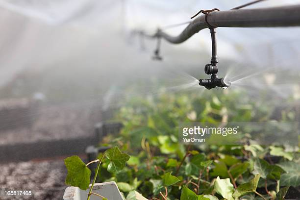 Irrigation in the greenhouse