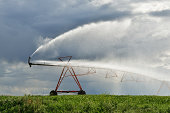 Irrigation pivot on the wheat field