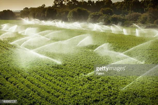 Gicleurs d'arrosage plantes alléchants sur des terres agricoles fertiles
