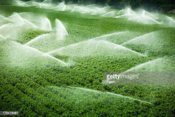 Irrigation sprinkler watering crops on fertile farm land