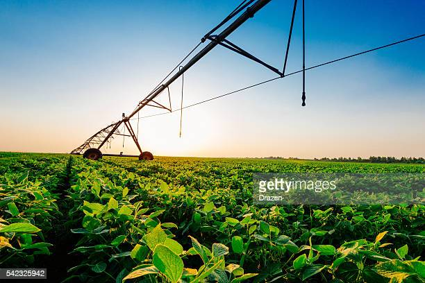 Irrigation system on soybean field in sunset on farm