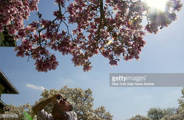 Irwin Fenichel focuses on a flowering magnolia tree on a spring day that seemed more like summer the mercury hit 86 at the Brooklyn Botanic Garden