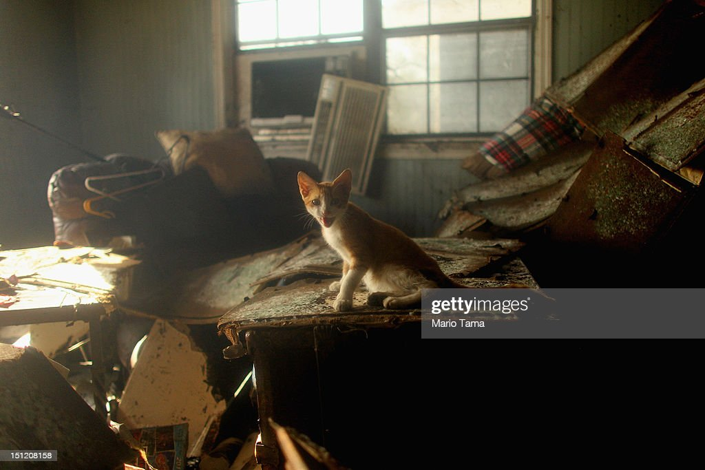 Isaac the newly renamed rescued family cat sits in the flooded Martinez home in Plaquemines Parish on September 3 2012 in Braithwaite Louisiana The...