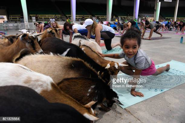 Isabel Swartwood gets lots of attention from a posse of goats as she participates in goat yoga at the Denver County Fair on July 23 2017 in Denver...