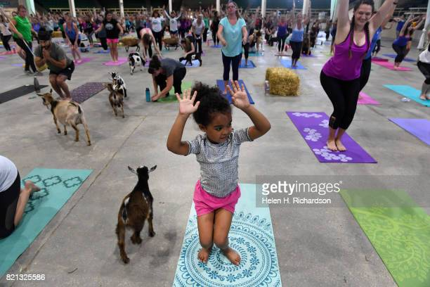 Isabel Swartwood tries to stay focused on learning yoga moves as a baby goat passes by during goat yoga at the Denver County Fair on July 23 2017 in...