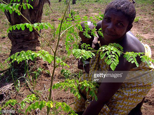 Isabelle LIGNER Madeleine Adjovi and her baby girl Sandrine both HIV positive pose next to a Moringa tree in a field belonging to the Apevivis...