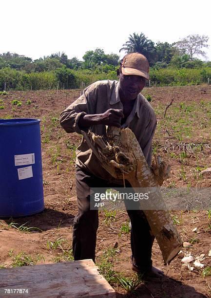 Isabelle LIGNER Paulin Dansou HIV positive works Moringa in a field belonging to the Apevivis association in Kpomasse 30 November 2007 The...