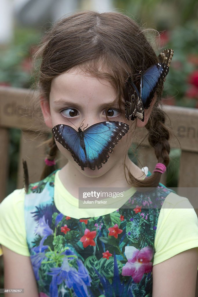 Isla, aged 5, at the opening of 'The Sensational Butterflies' exhibition at Natural History Museum on March 31, 2014 in London, England.