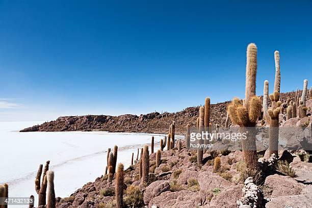 Isla del Pescado on Salar de Uyuni