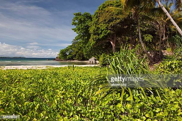 Island near Sorong Raja Ampat West Papua Indonesia