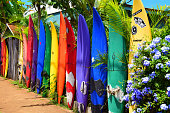 Vibrant color, tropical flowers, rainbows, waterfalls, sunsets and beautiful beaches make for a memorable vacation on the Island of Maui, Hawaii.