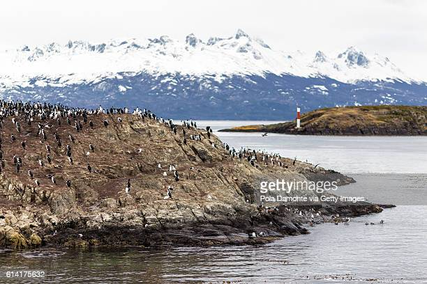 Island of the birds close to Lighthouse Les Eclaireurs at Beagle Channel in Ushuaia, Argentina