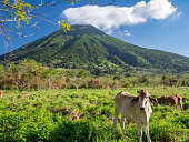 Island Ometepe in Nicaragua with the vulkan concepcion