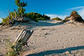 shifting sands bring life or death in Sandbanks Provincial park