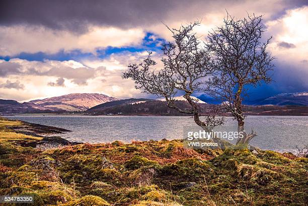 Isle of Lismore, lone tree with views towards the head of Loch Linnhe