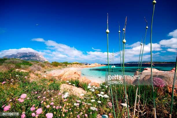 Isola Cavalli island Porto San Paolo Loiri Sardinia Italy Europe